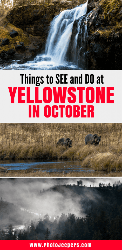 Imagine visiting Yellowstone National Park when the crowds are gone; animals exhibit interesting behaviors and create magical sounds; leaves and grasses turn yellow and orange; and no biting bugs to swat. It sounds magical and surreal doesn't it? You can experience Yellowstone National Park like that in October. Here is some information, tips and personal experience on what to see and do in Yellowstone during Fall. You'll want to save this to your travel board to help you plan your trip.