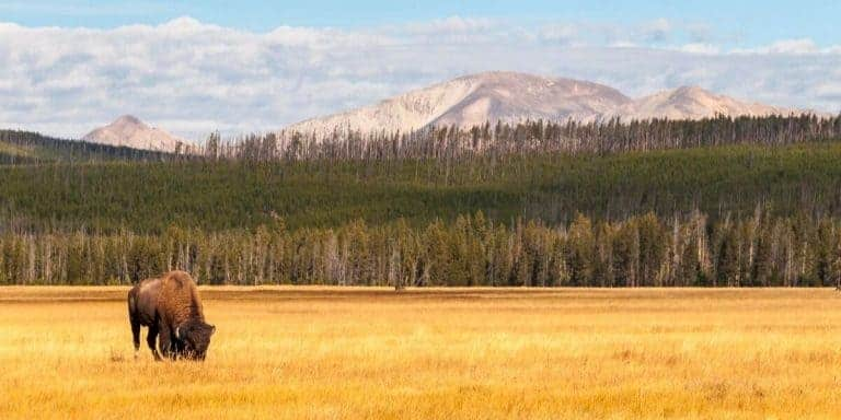 Yellowstone in October – Is It A Good Time To Visit?
