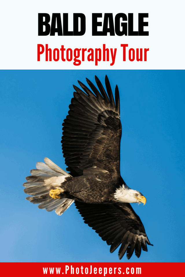 Bald Eagle Photography Tour in Washington State by Photo Jeepers