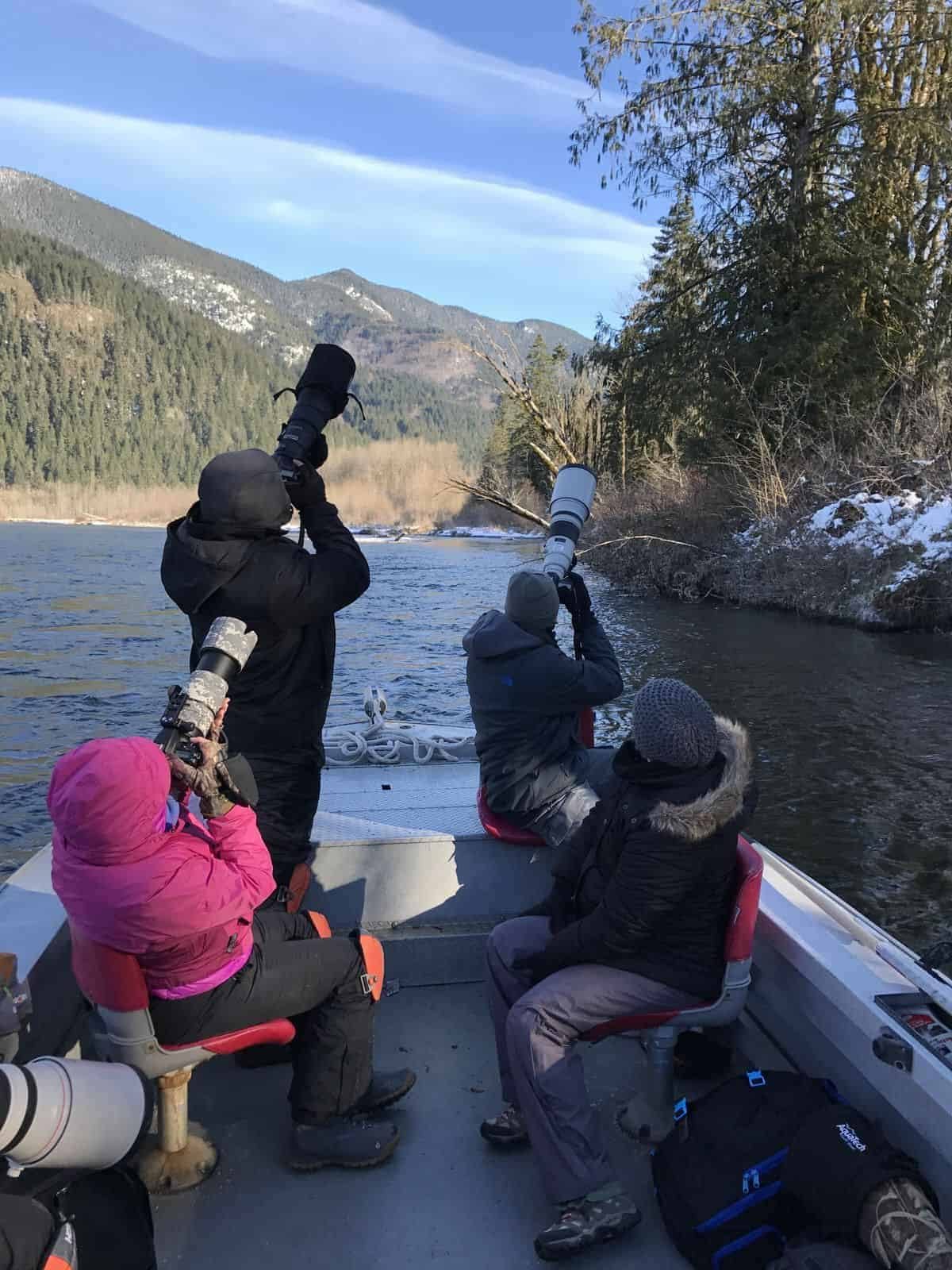 Bald eagle photography tour in a boat along the Skagit River
