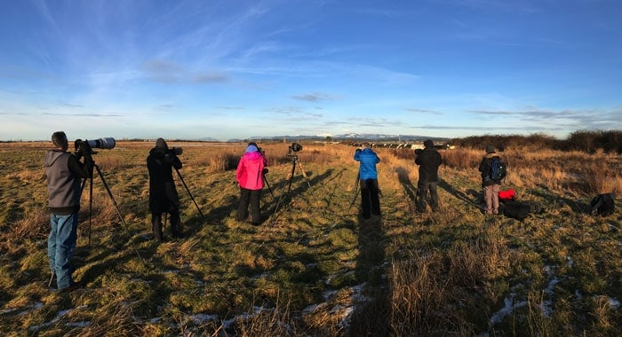 Bald Eagle Photography Tour group in January photographing short eared owls in Washington