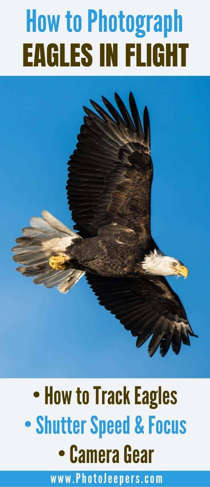 Learn how to photograph eagles in flight.: practice tracking, understand shutter speed and focus settings, have the right camera gear. #photography #eagles #baldeagles #photojeepers