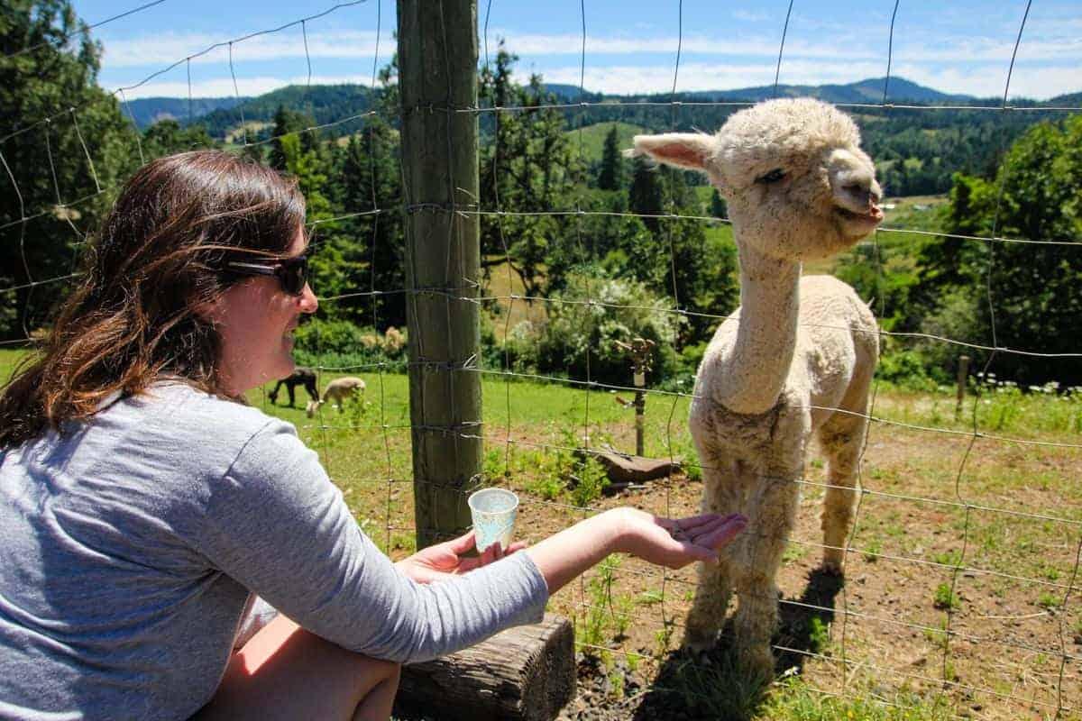 Kids will love petting llamas in Hood River, Oregon
