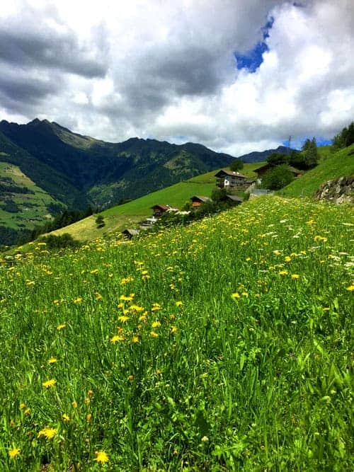 green hillside with wildflowers