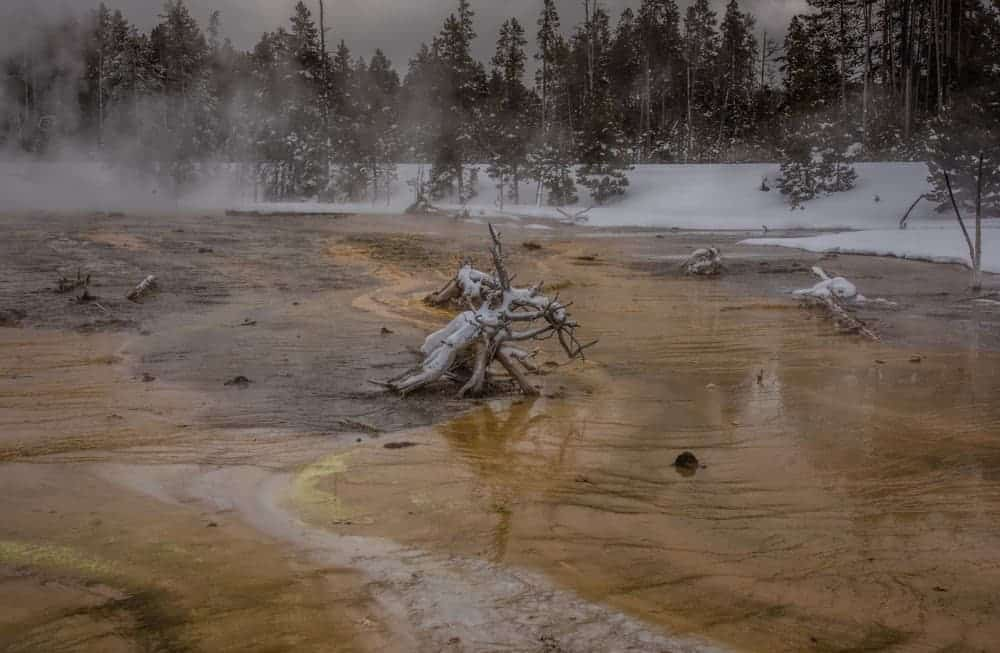 Dead tree stump in a hot spring at Yellowstone in the winter