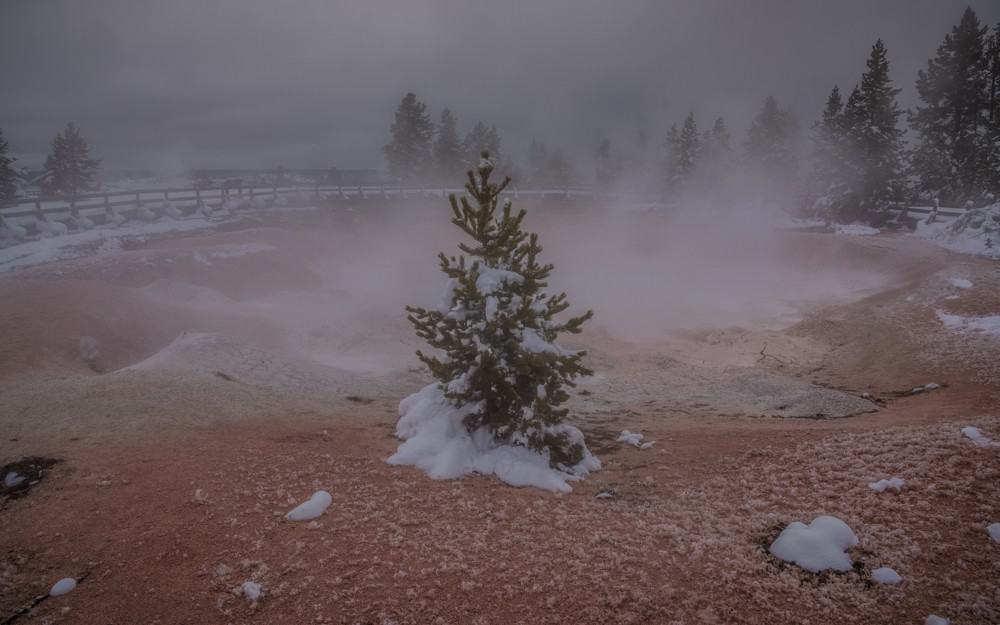 Tree near bubbling mud at Yellowstone in the winter