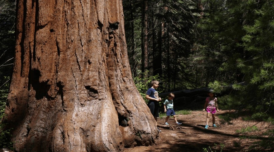 Kids standing by huge tree trunk at Sequoia National Park: National Parks with kids
