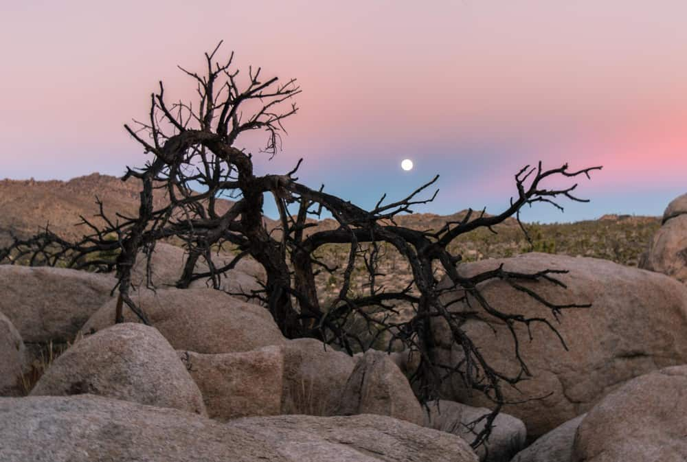 Joshua Tree National Park: National Parks with kids