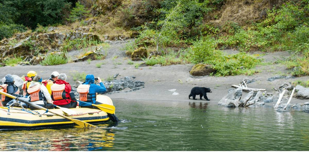Seeing a black bear on a Rogue River rafting tour in Oregon.