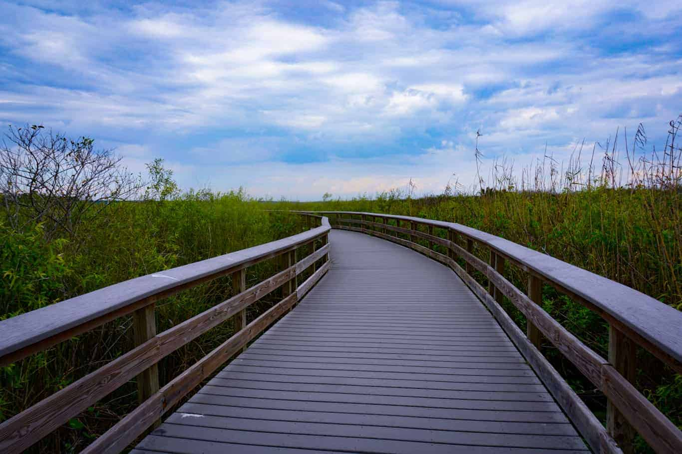 Anhinga Trail Boardwalk at Everglades National Park.