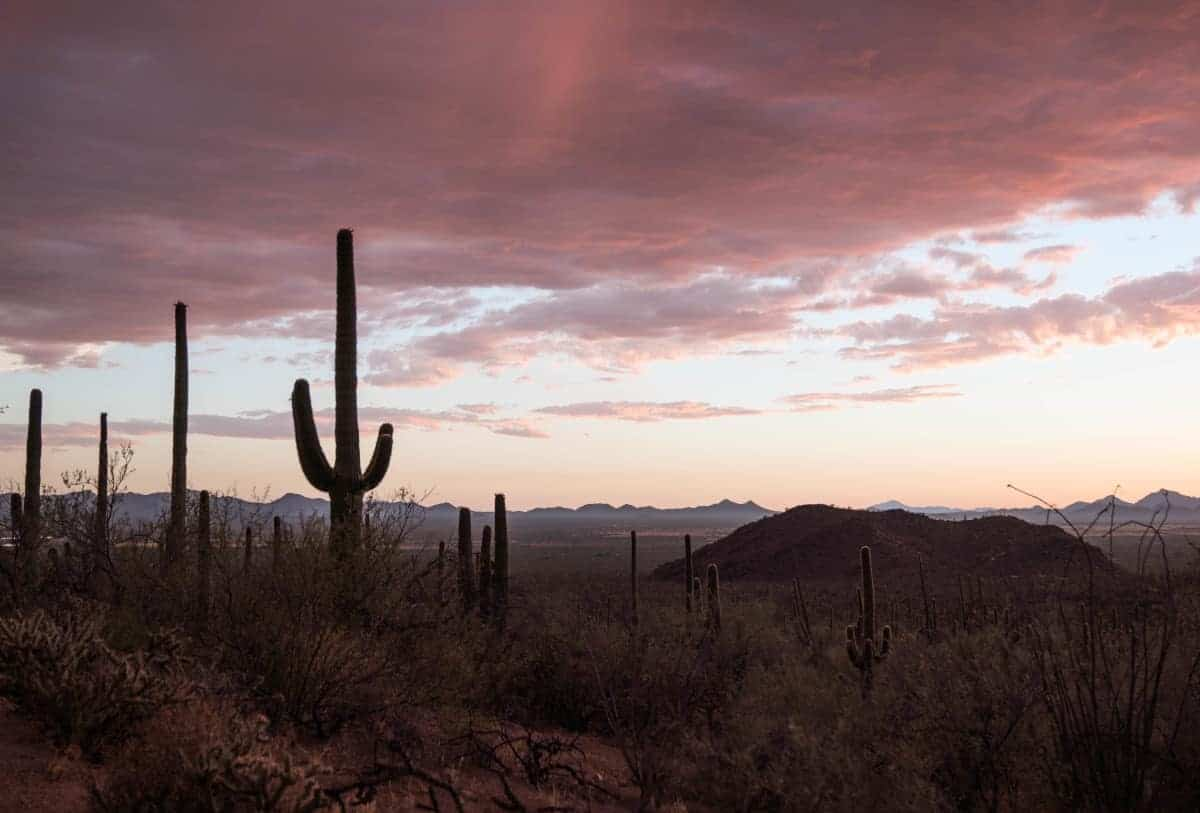 Spring is the best time to visit Saguaro National Park