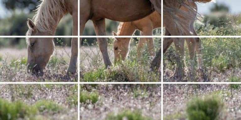 Using the Rule of Thirds to Take Better Landscape Photos