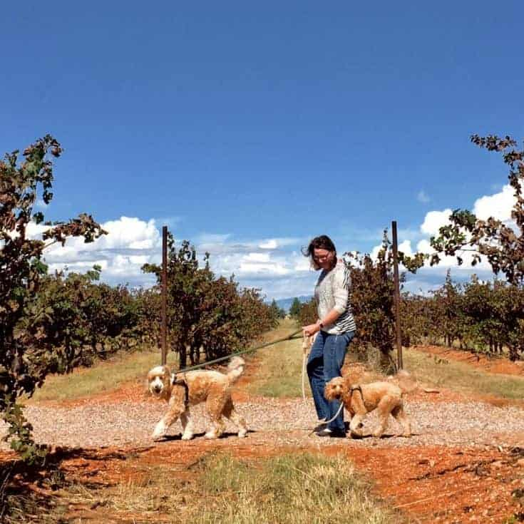 Pack Field Trip to the Most Dog-Friendly Winery in Southern Arizona