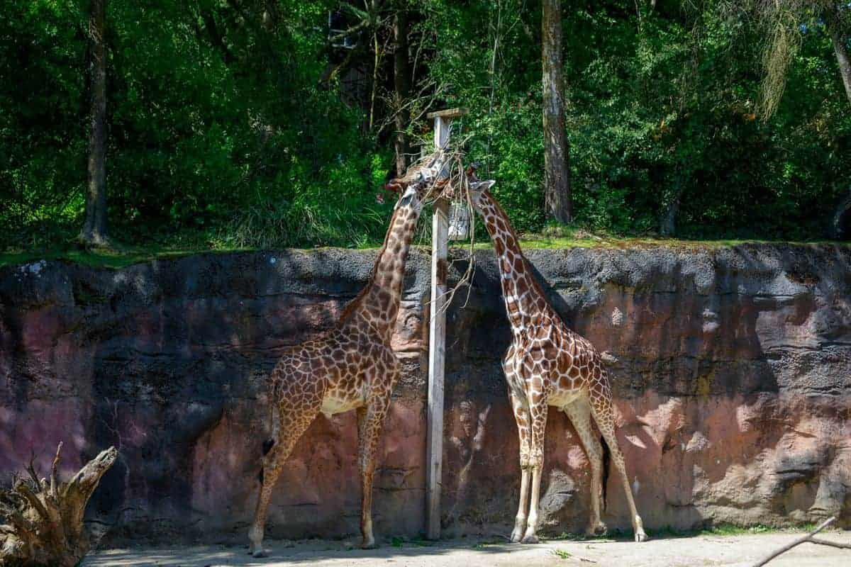 The Oregon zoo is the perfect family friendly attraction.
