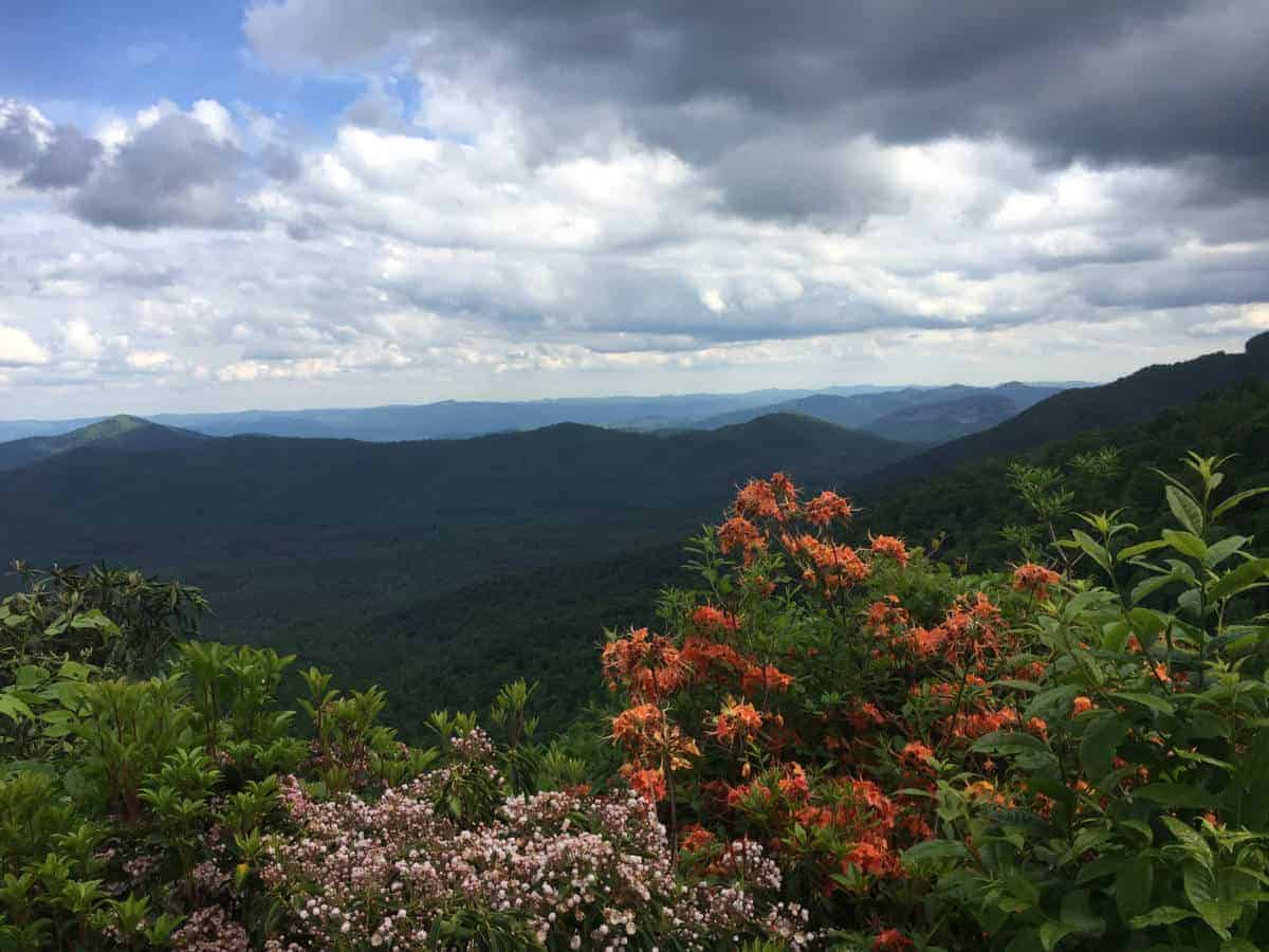 Vibrant colors you'll see in May at Great Smoky Mountains National Park.