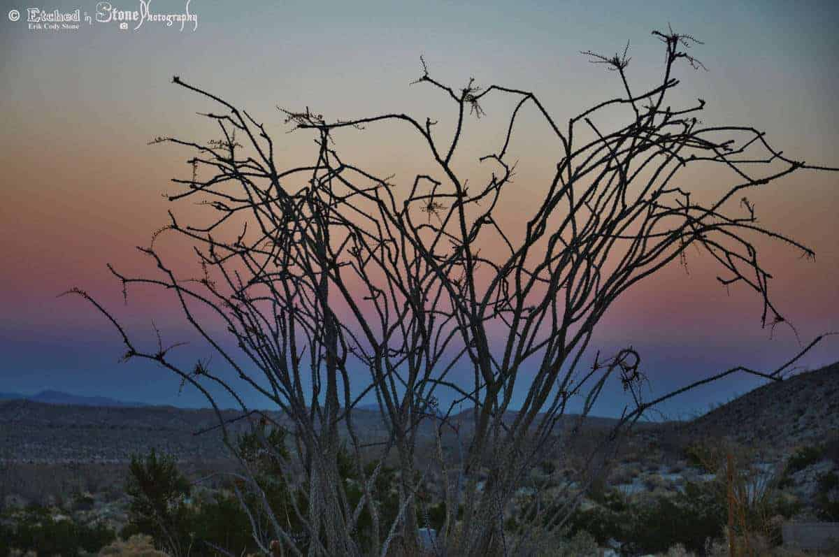 Relive moments with photos: sunset in the desert.
