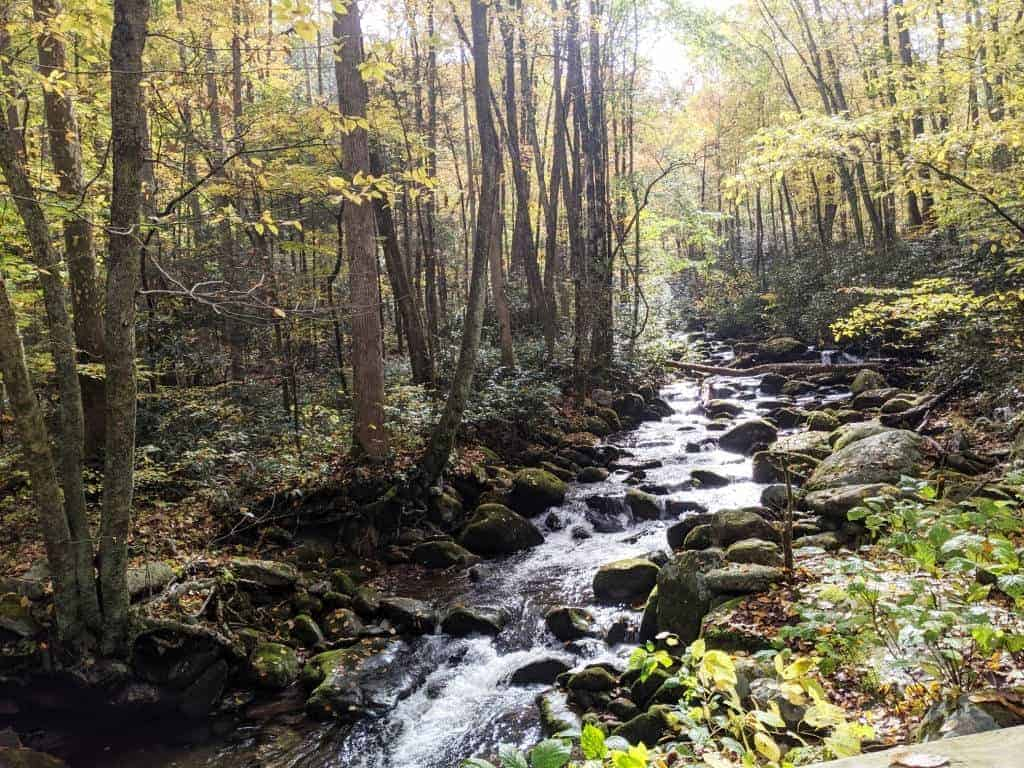Enjoy a cool summer hike in the Great Smoky Mountains.