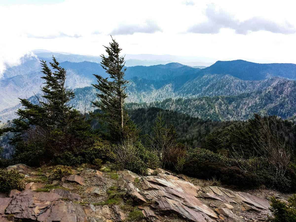 A beautiful view along the Mt. LeConte hiking trail.