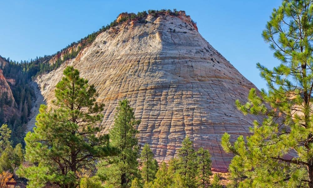 Checkerboard Mesa is a fun stop at Zion in the summer.