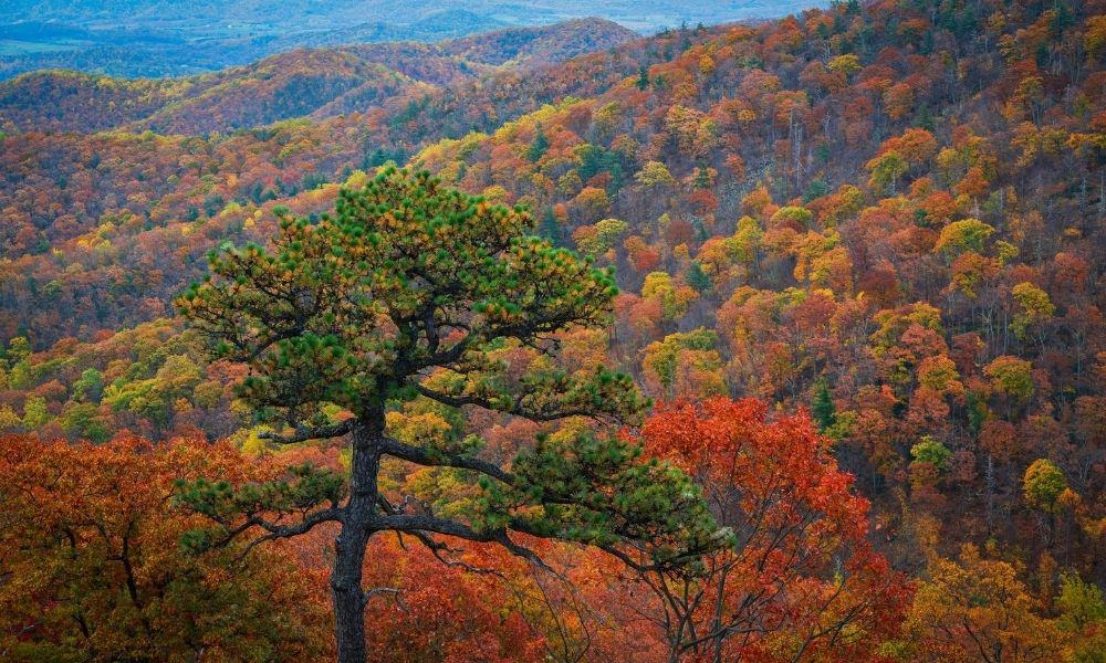 Vibrant fall colors seen at Shenandoah National Park.