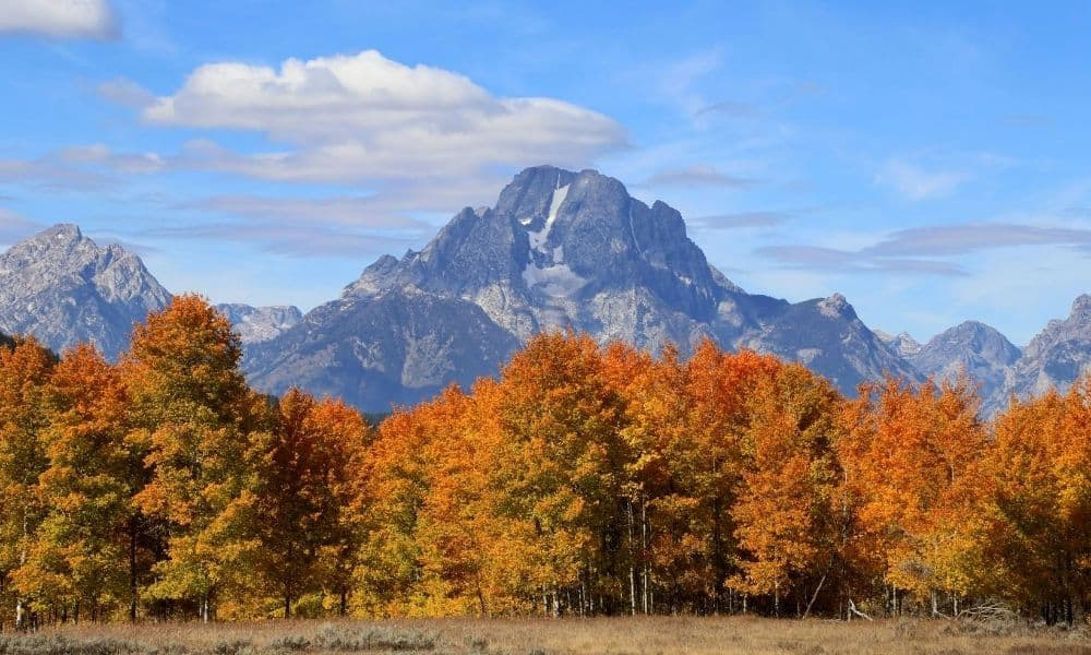 Fall color is striking at Grand Teton National Park.