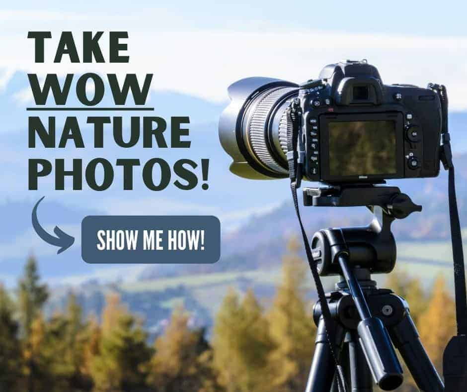 take wow nature photos