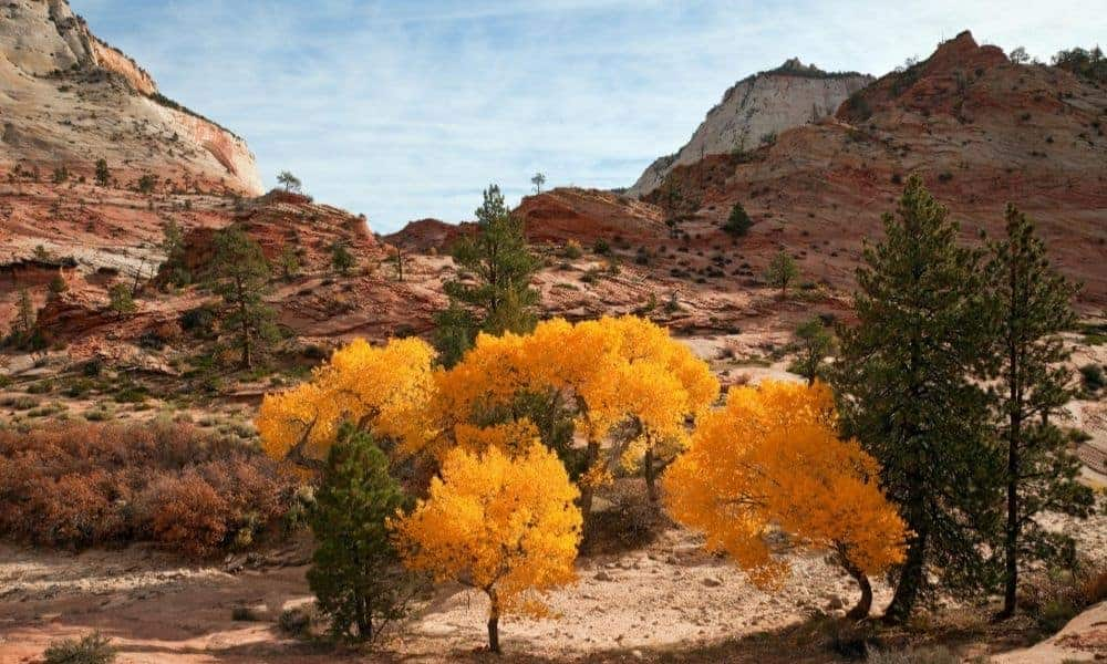 Zion National Park with yellow fall foliage.