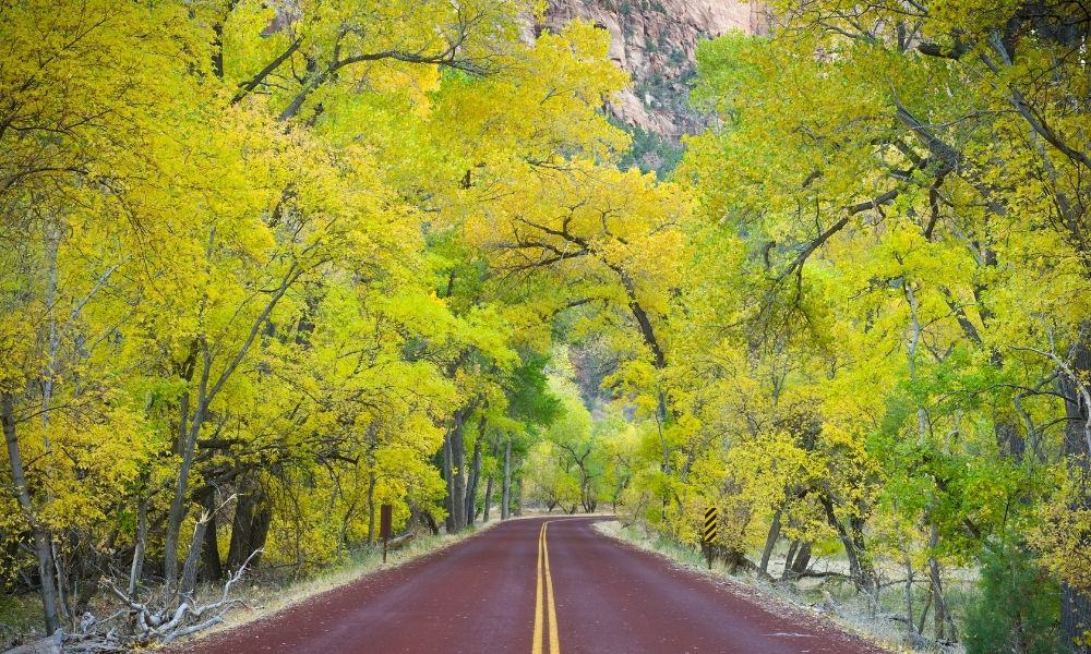 road through Zion National Park with colorful fall foliage.