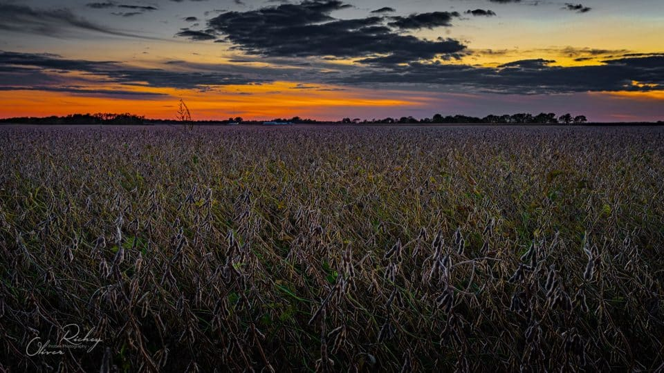 field at sunset landscape photography