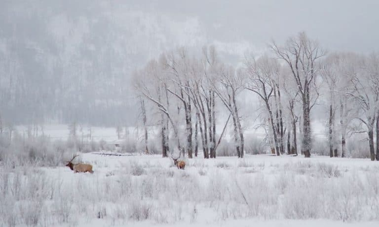 What You Need to Know for Visiting Yellowstone in January