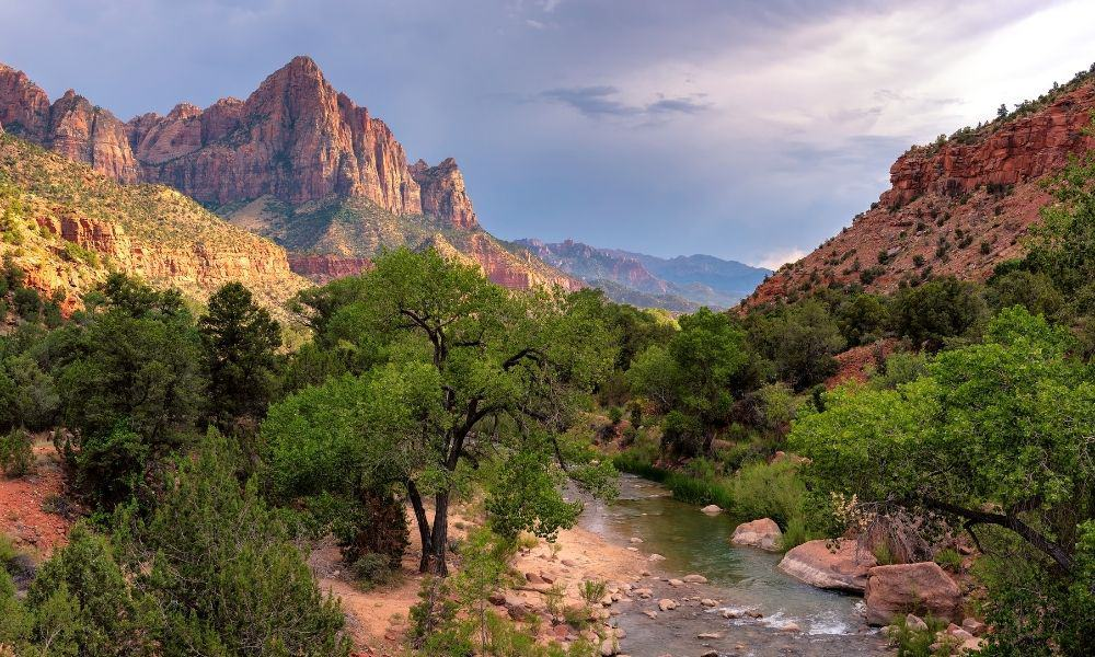zion national park in the spring