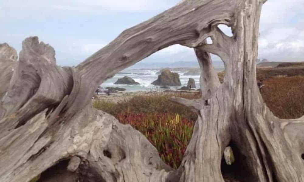 framing photo ideas - driftwood framing rocks on the beach