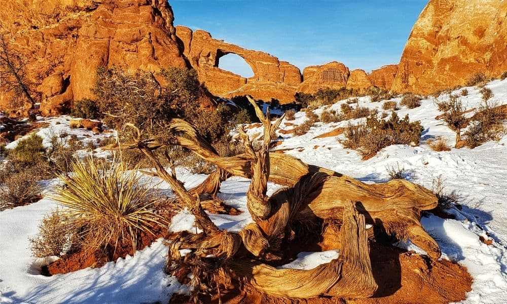 Arches National Park in the winter with snow