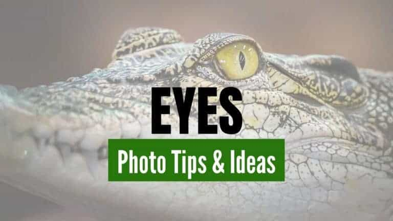 Tips and Ideas for Photographing Eyes