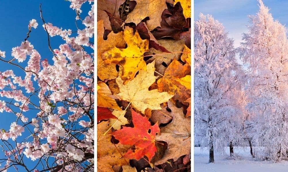 seasons photography ideas