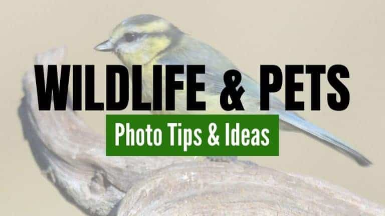 Tips and Ideas for Photographing Wildlife and Pets