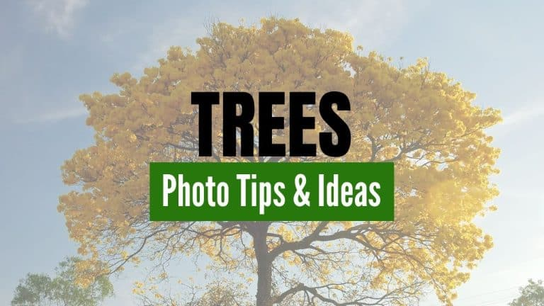 Tips and Ideas to Photograph Trees